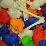 3D printing changes shape of anatomy learning